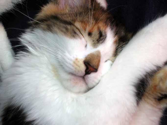 Sleepy Viola close up